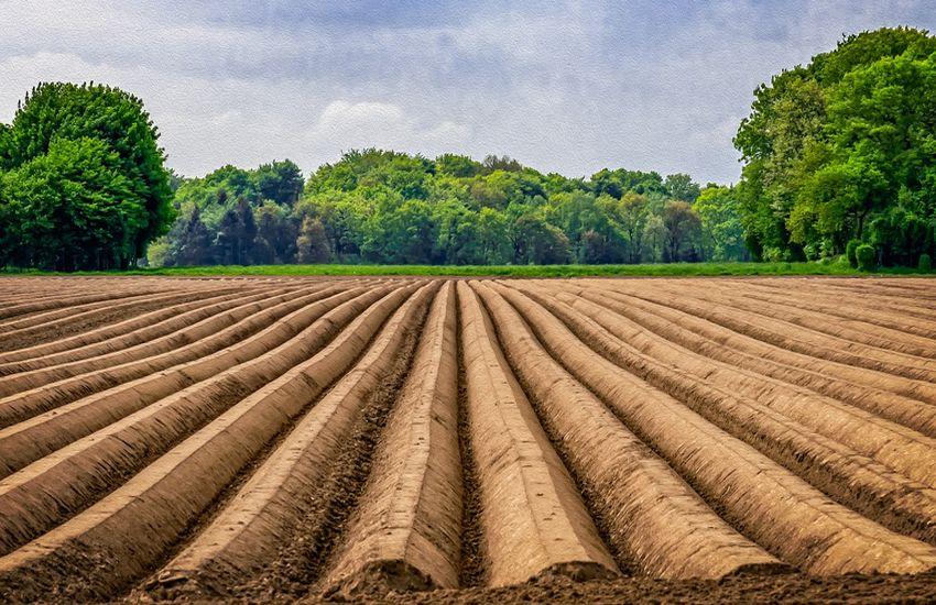 Maraîchage en agriculture raisonnée : amélioration de la production avec l'eau structurée