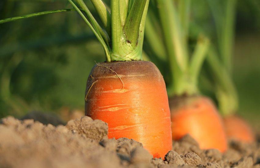 Mejor conservación de los vegetales mediante lavado con agua estructurada.