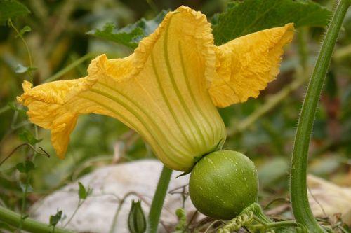 gain-arrosage-legume