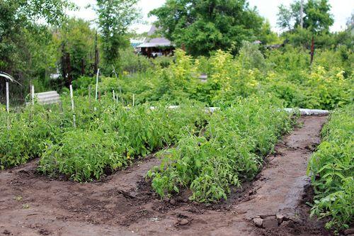 jardin-de-la-terre-eau-structuree