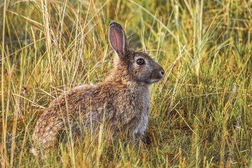 temoiging-breeding-rabbit-above-ground