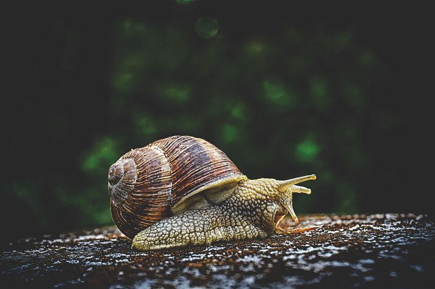 helinove-eau-structuree-escargot