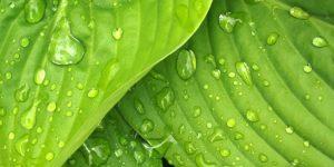 eau-structuree-vegetaux